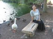 紐西蘭風情:天鵝湖.JPG