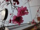 2015.03.15 媽祖萬人崇bike 大甲-彰化-雲林-嘉義:BIKE媽祖-135.JPG