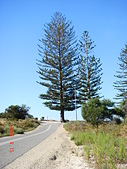 Rottnest Island:DSC09358