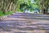 104年看到的紫色花毯:1040430隧道花開_20.jpg