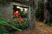 番茄會社的鳳凰花開:980525_21.JPG