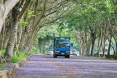 104年看到的紫色花毯:1040430隧道花開_14.jpg