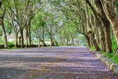 104年看到的紫色花毯:1040430隧道花開_01.jpg