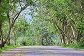 104年看到的紫色花毯:1040430隧道花開_04.jpg