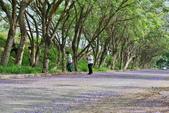 104年看到的紫色花毯:1040430隧道花開_13.jpg