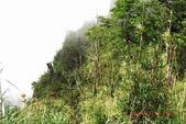 大塔山~對高岳:009.jpg