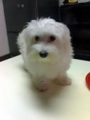 我家的腦殘狗:1254110416.jpg