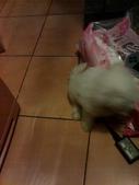 我家的腦殘狗:1254110405.jpg