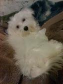 我家的腦殘狗:1254110421.jpg