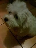 我家的腦殘狗:1254110408.jpg