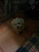 我家的腦殘狗:1254110409.jpg