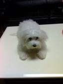 我家的腦殘狗:1254110414.jpg