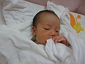 2010.10.01~10月14日 Dora 24天前點滴:10月03日 剛洗完澡的Dora.JPG