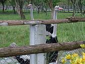 2008年國慶日  花蓮行 第一天 兆豐農場:DSCF0207.JPG