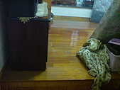 2009年8月9日   88水災 中午到3點 開始清理家園 :DSC06639.JPG
