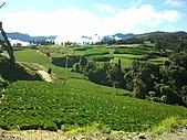 2010年10月25日 大禹嶺+翠峰:梨山福壽山農場 自然.jpg