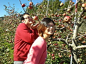 2010年10月25日 大禹嶺+翠峰:梨山福壽山農場 蘋果樹 kuso.jpg