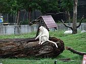 2008年國慶日  花蓮行 第一天 兆豐農場:DSCF0183.JPG