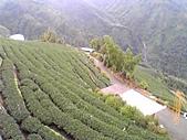 9/2~9/5杉林溪茶道:茶園