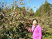 2010年10月25日 大禹嶺+翠峰:梨山福壽山農場 蘋果樹 老媽.jpg