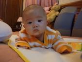 2011年Dora的人生第一個春節:0127Dora 趴著.JPG