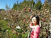 2010年10月25日 大禹嶺+翠峰:梨山福壽山農場 蘋果樹 鶴齡.jpg