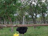 2008年國慶日  花蓮行 第一天 兆豐農場:DSCF0205.JPG