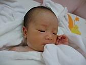 2010.10.01~10月14日 Dora 24天前點滴:10月03日 秀氣的Dora.JPG
