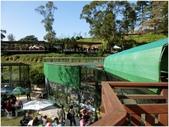 10501森林鳥花園:CIMG09340.JPG