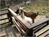 1001105羊世界:91597.JPG