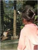 10501森林鳥花園:CIMG08610.JPG