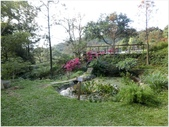 10501森林鳥花園:CIMG10060.JPG