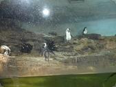 1000606木柵動物園:06059.JPG