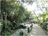 10501森林鳥花園:CIMG09480.JPG
