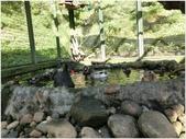 10501森林鳥花園:CIMG08810.JPG