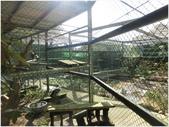 10501森林鳥花園:CIMG09680.JPG
