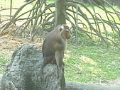 美猴王:猴王姿態8.JPG