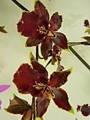 特別花:P1120677.JPG