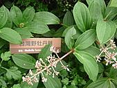 991214台北2010年世界花卉博覽會-花卉植物:P2460819.JPG