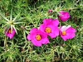 特別花:1915001695.jpg