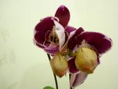 蘭花:1419940146.jpg