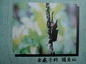 動物昆蟲:獨角仙.JPG