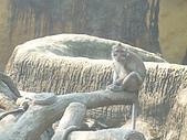 美猴王:猴王姿態9.JPG