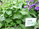 991214台北2010年世界花卉博覽會-花卉植物:P2460777.JPG