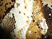 蜂蜜-土蜂蜜:1534964840.jpg