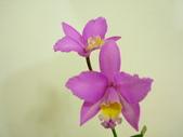 蘭花:1419940147.jpg