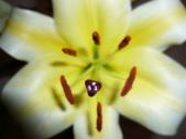 花瓣之美:1797083892.jpg