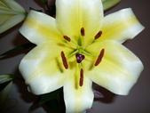 花瓣之美:1797083893.jpg