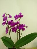 蘭花:1419940148.jpg