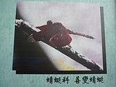 動物昆蟲:紅蜻蜓.JPG